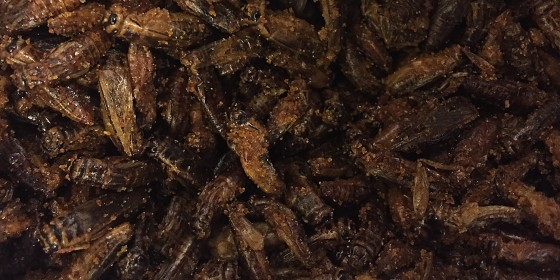 Crickets for snacking on. Really. Yes. Insects.